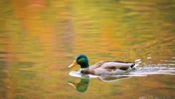 na-zlatnom-jezeru