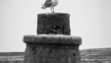 crno-bijele-fotografije-067