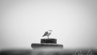 crno-bijele-fotografije-075