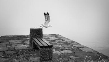 crno-bijele-fotografije-080