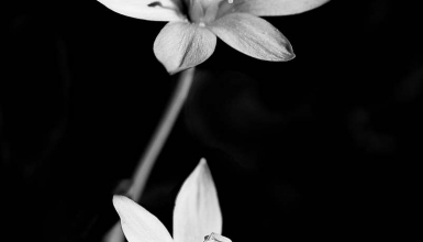 fotografije-cvijeca-001