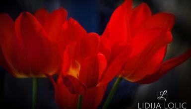 fotografije-cvijeca-002-2