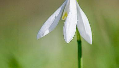 fotografije-cvijeca-004