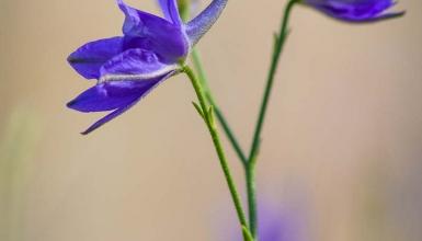 fotografije-cvijeca-005-2