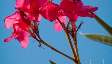 fotografije-cvijeca-006