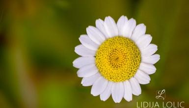fotografije-cvijeca-008-2
