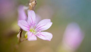 fotografije-cvijeca-009