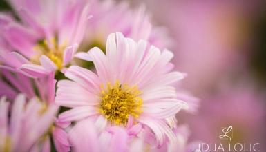 fotografije-cvijeca-010