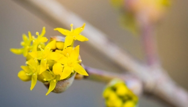 fotografije-cvijeca-012