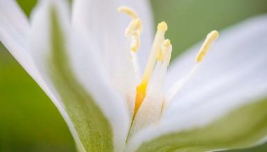 fotografije-cvijeca-014