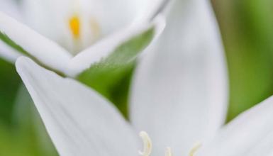 fotografije-cvijeca-015