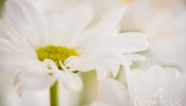 fotografije-cvijeca-017