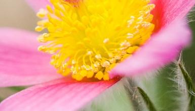 fotografije-cvijeca-018