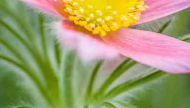 fotografije-cvijeca-020