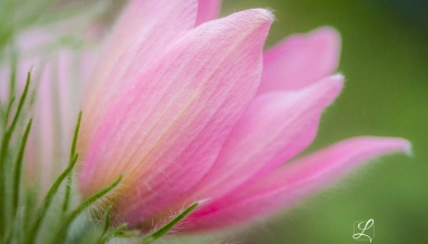 fotografije-cvijeca-021