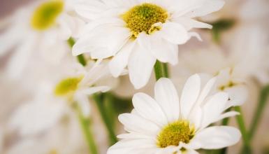fotografije-cvijeca-022
