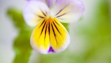 fotografije-cvijeca-023