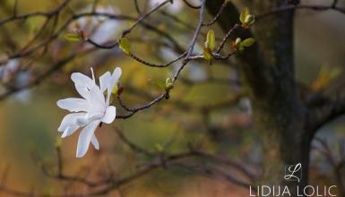 fotografije-cvijeca-024