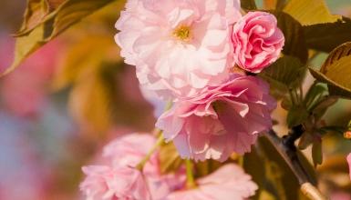 fotografije-cvijeca-026