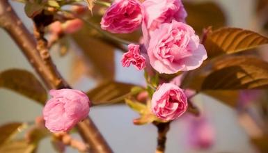 fotografije-cvijeca-027