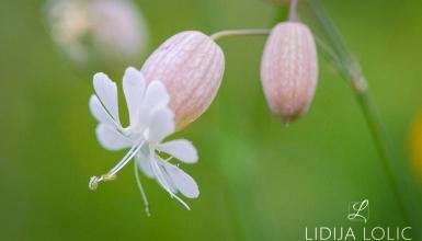 fotografije-cvijeca-028