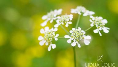 fotografije-cvijeca-029