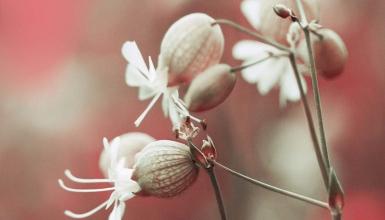 fotografije-cvijeca-030
