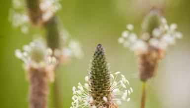 fotografije-cvijeca-031