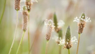fotografije-cvijeca-033