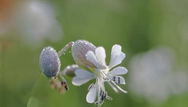 fotografije-cvijeca-035