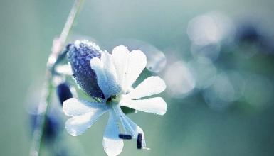 fotografije-cvijeca-036
