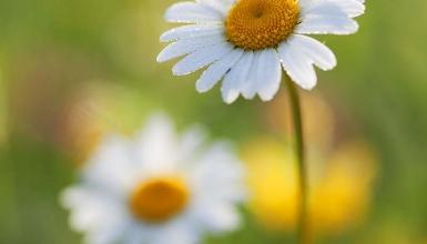 fotografije-cvijeca-037