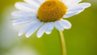 fotografije-cvijeca-038