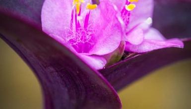 fotografije-cvijeca-042