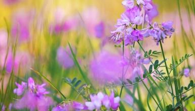 fotografije-cvijeca-045