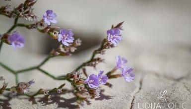 fotografije-cvijeca-047