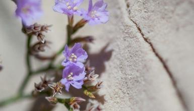 fotografije-cvijeca-048