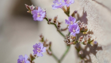 fotografije-cvijeca-049