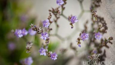 fotografije-cvijeca-050