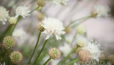 fotografije-cvijeca-051