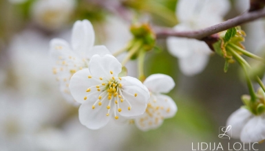 fotografije-cvijeca-054