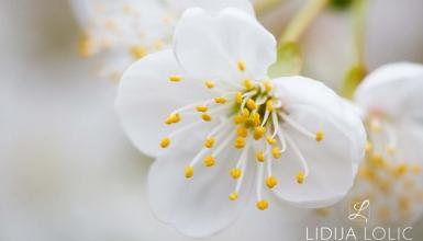fotografije-cvijeca-055