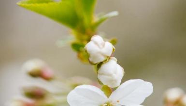fotografije-cvijeca-056