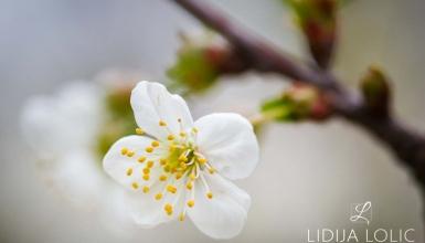 fotografije-cvijeca-057