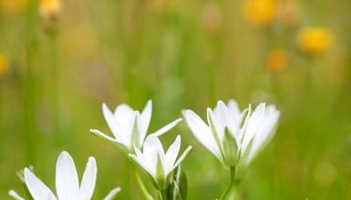fotografije-cvijeca-058