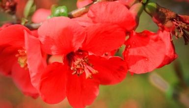 fotografije-cvijeca-061