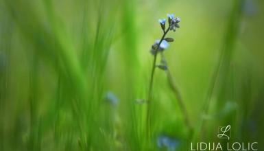 fotografije-cvijeca-063