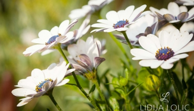 fotografije-cvijeca-065