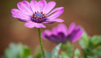 fotografije-cvijeca-066