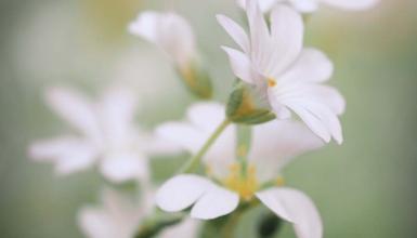 fotografije-cvijeca-068